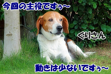 4_20110604225202.jpg
