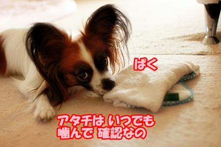 4_20110623224729.jpg