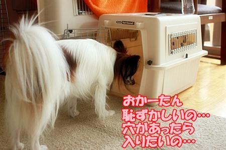 4_20110713013142.jpg