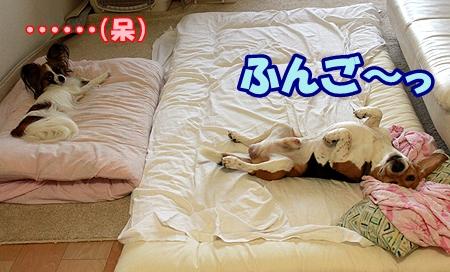 4_20110719081027.jpg