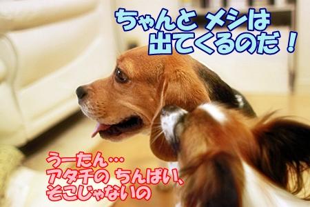 4_20110720161551.jpg