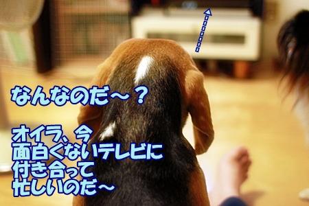 4_20110721232631.jpg