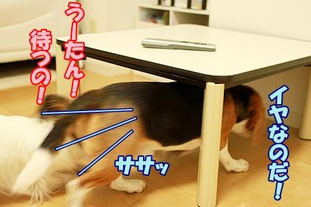 4_20110726211511.jpg