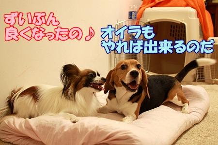 4_20110806205617.jpg