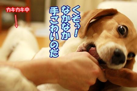 4_20110822223142.jpg