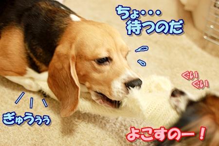 4_20110829231807.jpg