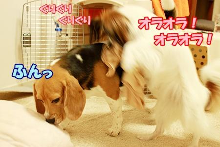 4_20110901000241.jpg