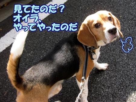 4_20111003105632.jpg