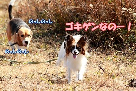 4_20111108165131.jpg