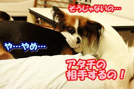 5_20110421204601.jpg