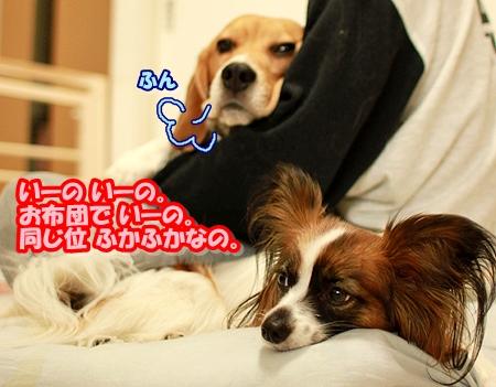 5_20110504025434.jpg