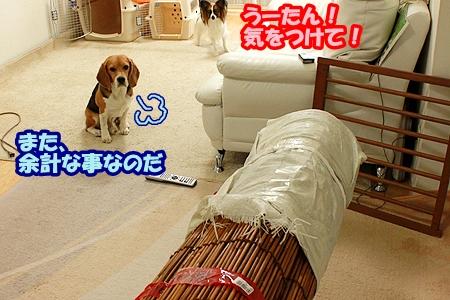 5_20110511231456.jpg