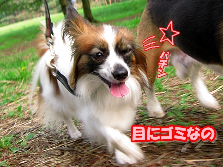 5_20110513210910.jpg