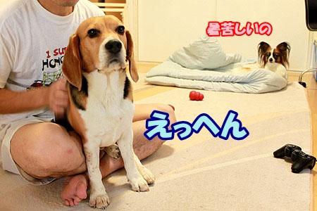 5_20110525220125.jpg