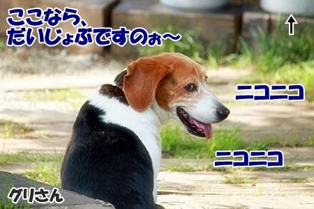 5_20110606223345.jpg