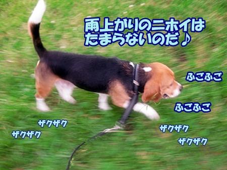 5_20110611205518.jpg