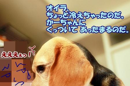 5_20110623224729.jpg