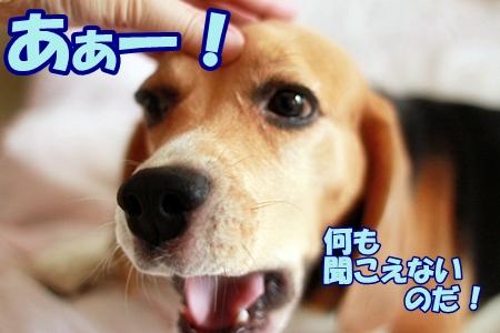 5_20110713013416.jpg