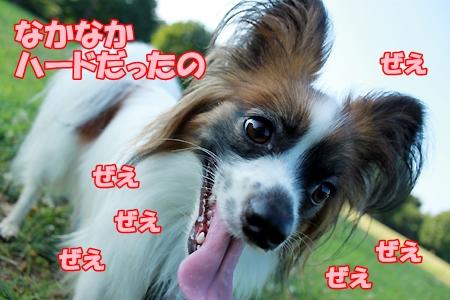5_20110718081250.jpg