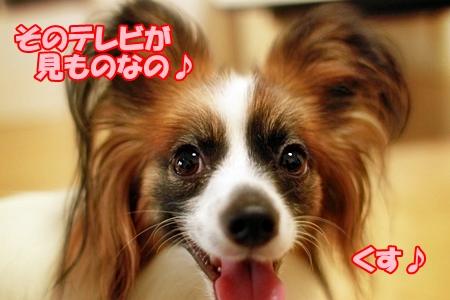 5_20110721232631.jpg