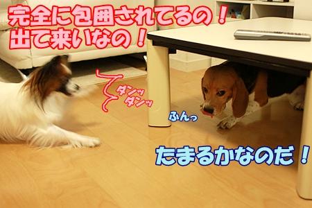 5_20110726211511.jpg