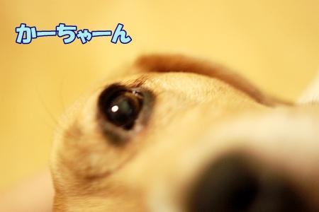 5_20110803231951.jpg