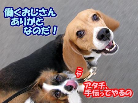 6_20110413204032.jpg