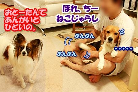 6_20110513103014.jpg
