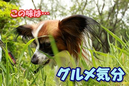 6_20110522184741.jpg