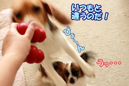 6_20110710093958.jpg