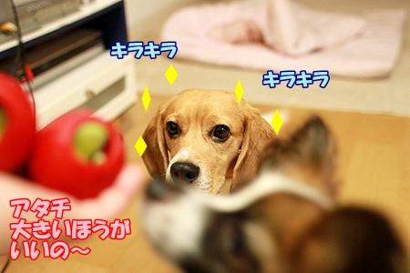 6_20110714220704.jpg