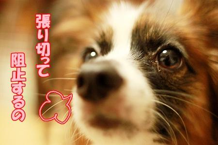 6_20110803231951.jpg