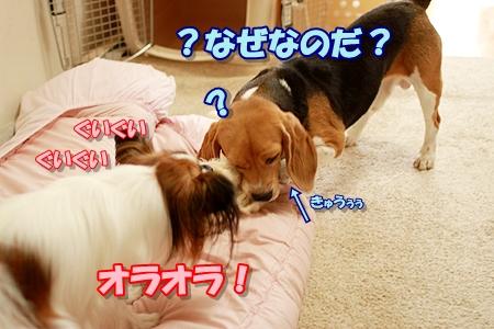 6_20110829231806.jpg