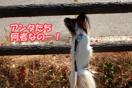 6_20111108165110.jpg