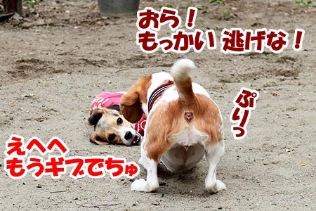 7_20110517011000.jpg
