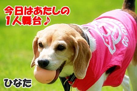 7_20110604225123.jpg