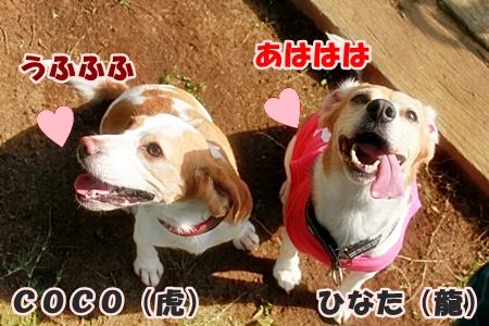 7_20110606001912.jpg