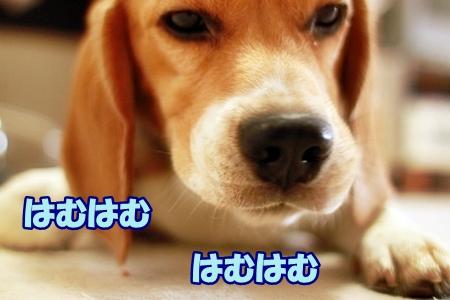7_20110614002608.jpg