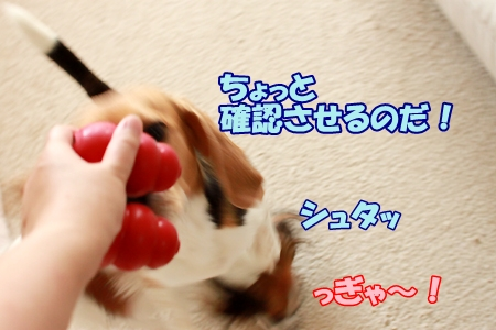 7_20110710093958.jpg