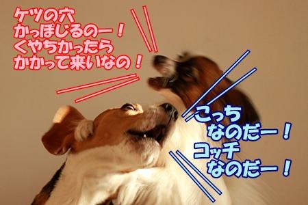 7_20110716231042.jpg