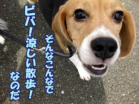 7_20111003110446.jpg