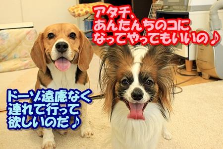 8_20110309220703.jpg