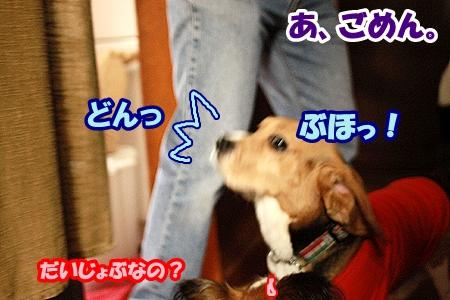 8_20110424235751.jpg