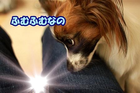 8_20110519202741.jpg