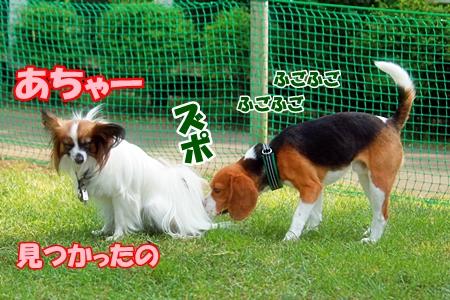 8_20110604225121.jpg
