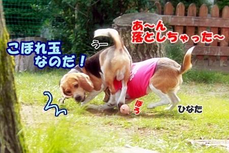 8_20110606001911.jpg