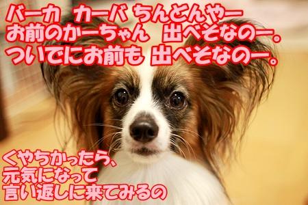 8_20110716231042.jpg