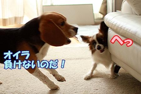 8_20110722221220.jpg