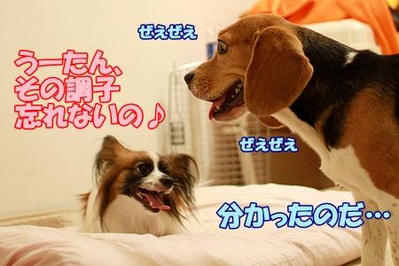 8_20110806205617.jpg