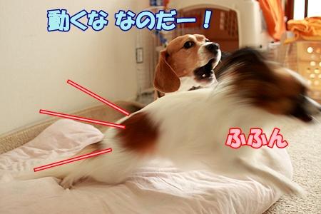 9_20110722221220.jpg